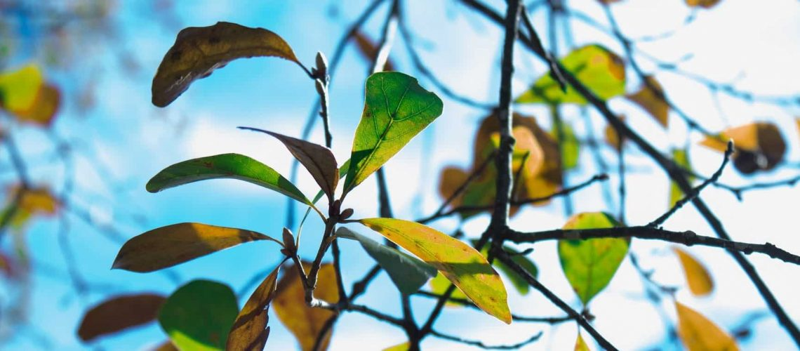 WW trim branches_blog